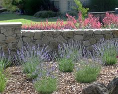Low Maintenance Landscaping Ideas Design, Pictures, Remodel, Decor and Ideas - page 6