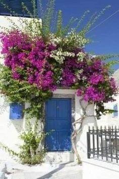 Beautiful Gardens, Beautiful Homes, Beautiful Places, Beautiful Pictures, House Beautiful, Climbing Vines, Diy Garden, Fruit Garden, Colorful Garden