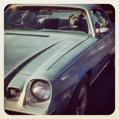 Dogs ᏝᎧᏉᏋ Cars - reposted by Averson Automotive Group LLC Car Insurance Tips, Automotive Group, Buick Gmc, Dog Car, Daytona Beach, Bullies, Dog Love, Showroom, The Help