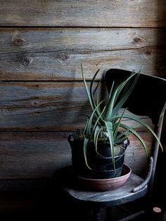 Portfolio | Alice Gao Photography