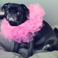 """Did I put my tutu on wrong or something?"" 
