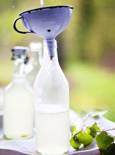 Koivunlehtisima on ihana kesäjuoma. Tarvitset sen tekemiseen vain rauduskoivun lehtiä, vettä, sitruunaa, hiivaa ja sokeria.