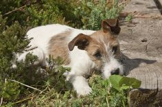 Les bons conseils pour faire l'apprentissage de la propreté à votre chien. Extrait du Traité rustica sur l'éducation du chiot et du chien.