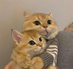 Funny Cute Cats, Cute Baby Cats, Cute Little Animals, Cute Funny Animals, Kittens Cutest, Cats And Kittens, Pretty Cats, Beautiful Cats, Image Chat