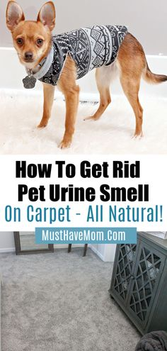 20 fascinating pet urine images cleaning hacks cleaning cat pee rh pinterest com