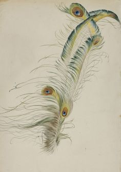 August Lucas, Peacock feathers, 1829. Watercolor. Hessisches...