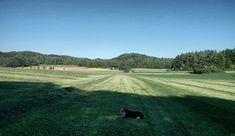 #Finlay #bordercollie #collie #dogs #Hund #dogstagram #dogsofinstagram #dog #bordercolliesofinstagram #borderfame #Blackview #bv6000
