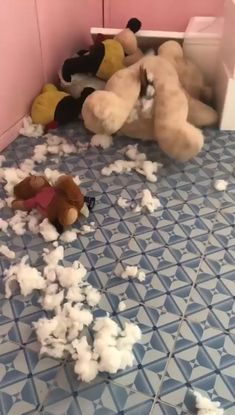 Un chien dchiquette un ours en peluche de l'intrieur Funny Animal Videos, Cute Funny Animals, Funny Animal Pictures, Cute Baby Animals, Funny Cute, Funny Photos, Funny Dogs, Cute Cats, Hilarious Pictures