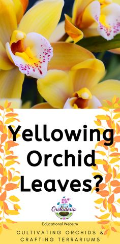 Yellow Leaves on Your Orchid: 8 Causes and Their Remedies Yellowing leaves make any orchid grower ne Yellow Leaves On Plants, Orchid Leaves, Indoor Orchids, Orchid Plants, Yellow Orchid, Build A Greenhouse, Minimalist Garden, How To Attract Hummingbirds