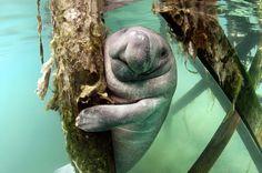 Underwater Photograhy Classes Orlando Florida | fun2dive--Manatee