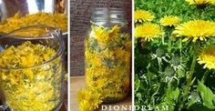 IT hosting professionale Artemisia Annua, Edible Wild Plants, Love Natural, Greens Recipe, Medicinal Plants, Natural Health, Natural Remedies, Healthy Life, Herbs