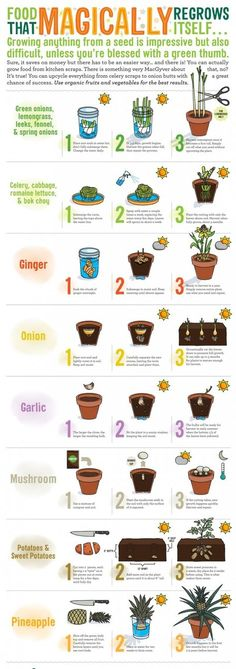Grow Your Own Foods At Home