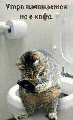 Texting the dog - LOLcats is the best place to find and submit funny cat memes and other silly cat materials to share with the world. We find the funny cats that make you LOL so that you don't… Funny Animal Memes, Cute Funny Animals, Cute Baby Animals, Funny Cats, Animals Dog, Cute Cats And Kittens, I Love Cats, Crazy Cats, Kittens Cutest