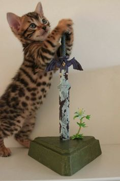 Silly kitty thinks he can wield the master sword... but also, awwww