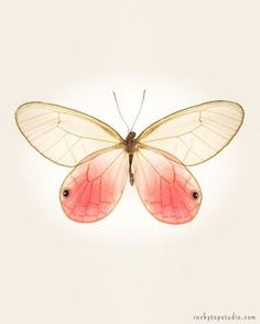 Fée papillon.