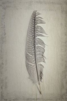 A Zen Series of Natural History Objects 12 Fine Art Photograph by lucysnowephotography on Etsy Dream Catchers, Gravure Illustration, Silverpoint, Feather Art, Feather Painting, Feather Tattoos, Painting Art, Paintings, Wow Art