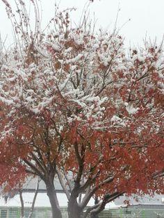 가을과 겨울의 만남