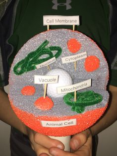 Animal Cell Model Ideas: Cake, Cookies, Pizza & How to Make It 3d Animal Cell Project, Plant Cell Project, Cell Model Project, 4th Grade Science Projects, School Projects, Projects For Kids, Project Ideas, 3d Cell Model, Plant Cell Model