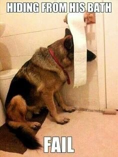 That will not work buddy You are too big to hide there It's bath Time!