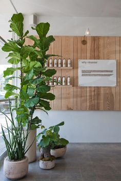 Beautiful Indoor Plants Design in Your Interior Home Bring nature indoors with house plants. There are home plants in all types, shapes and sizes - some liked for their flowers, others for their striking vegetation evaluate plants before bringing Interior Design Plants, Spa Interior, Salon Interior Design, Retail Interior, Salon Design, Plant Design, Yoga Studio Interior, Spa Design, Cafe Design
