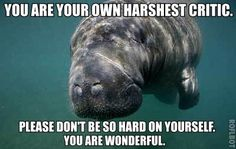 "[IMAGE DESCRIPTION: A photograph of a manatee's face, front on. TEXT: ""You are your own harshest critic. Please don't be so hard on yourself. You are wonderful.""](Image credit to Paul Nicklen via HowStuffWorks.)"