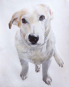 Pet Portraits, Hand Painted, Pets, Artist, Painting, Beautiful, Painting Art, Paintings, Painted Canvas