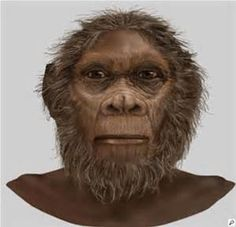 HOMO RUDOLFENSIS :es una especie de hominino fósil, que habitó en el este de África entre hace 2 y 1,7 millones de años,4 en el Gelasiense (Pleistoceno inferior).el Homo rudolfensis tiene, respecto al Homo habilis, una cara más plana, unos dientes post-caninos más amplios y con raíces y coronas más complejas y esmalte más grueso.