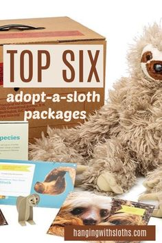 Roundup of the best Adopt a Sloth programs. Sponsor a sloth and help to save the sloths from threats of deforestation and the wildlife tourism trade. Adopt A Sloth, Wildlife Tourism, Sloth Stuff, Two Toed Sloth, Adoption Certificate, Baby Sloth, Save The Children, Sloths, Sloth
