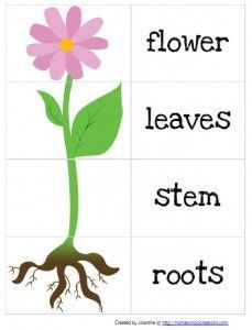 spring garden parts of a plant preschool printable