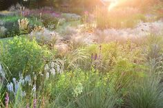 Die 57 besten bilder von garten sp tsommerbeete in gelb for Pflanzengestaltung garten
