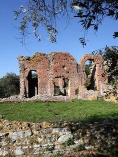Area Archeologica Massaciuccoli Romana        0584974550  -  3289065168