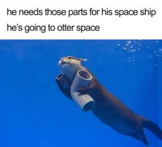 funny wholesome animal memes 9 40 adorable animals taking a sip from the meme stream (40 Photos)