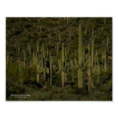Desert Flowers, Desert Plants, Arizona, Cactus, Maricopa County, Mountain Trails, Moon Art, Hiking Trails, Regional