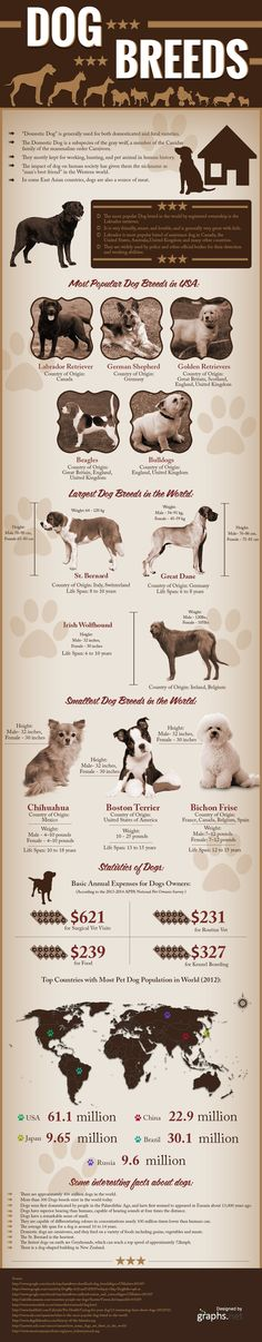 All about Dogs and Their Different Breeds #Infographics — Lightscap3s.com