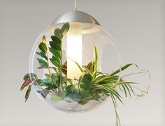 plant indoor light - Google Search