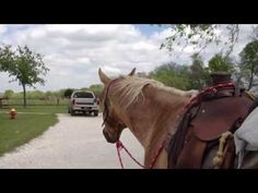Why Get Off Your Horse Before You Get Home From A Ride - Rick Gore Horsemanship - YouTube