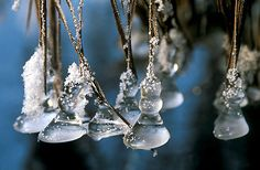 Icicles  -  Wonder of nature
