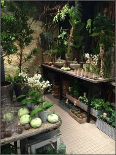Garden centre, garden center displays, indoor greenhouse, conservatories, f Garden Shop, Dream Garden, Home And Garden, Plantas Indoor, Garden Center Displays, Greenhouse Plans, Indoor Greenhouse, Garden Inspiration, Houseplants