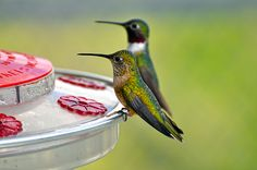 The World's Greatest Hunger-resistant and Most Voracious-eating Animals ~ Hummingbird