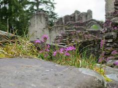 Inchmahome Priory, Scotland Purple Books, I Want To Travel, Great Britain, United Kingdom, Oregon, Ireland, Places To Visit, Europe, Dreams
