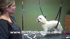 Homemade dog grooming table dog grooming basics all you need to how to groom a maltese puppy cut do it yourself pet grooming solutioingenieria Choice Image