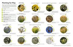 planting for play | also like the very simple graphics use to explain the plants and their uses