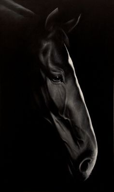 Ideas Painting Black And White Face Beautiful Horses All The Pretty Horses, Beautiful Horses, Animals Beautiful, Black Horses, Wild Horses, Clysdale Horses, Mustang Horses, Draft Horses, Equine Photography