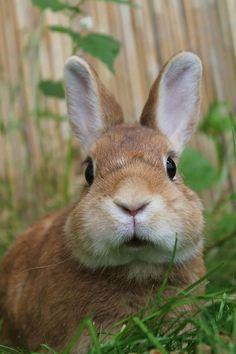 Those bunny cheeks. Funny Animal Pictures, Cute Funny Animals, Cute Baby Animals, Cute Dogs, Nature Animals, Animals And Pets, Animal Original, Cute Baby Bunnies, Tier Fotos