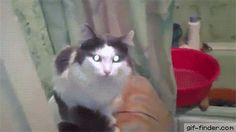 Cat in the bathroom closes door. Gif Bin is your daily source for funny gifs, reaction gifs and funny animated pictures! Large collection of the best gifs. Puppies And Kitties, Funny Cats And Dogs, Cats And Kittens, Cute Cats, Funny Animals, Cute Animals, Crazy Cat Lady, Crazy Cats, Game Mode