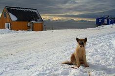 Greenland | iExplore