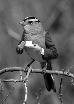 Coffee Bird great photoshop skills! Morning coffee before he sings and wakes everyone up.
