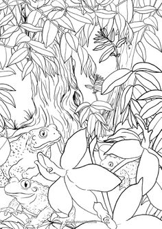 Animal Coloring Pages, Coloring Pages To Print, Colouring Pages, Adult Coloring, Secret Garden Colouring, Frog Crafts, Art Therapy, Faeries, Enchanted