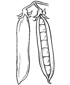 Thanksgiving Dinner Coloring Page Sheets - Peas in a pod coloring .