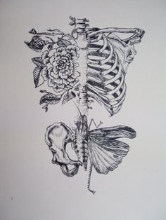 Rebecca Ladds of Soft Anatomies - absolutely AMAZING artist - LOVE her WORK!!!